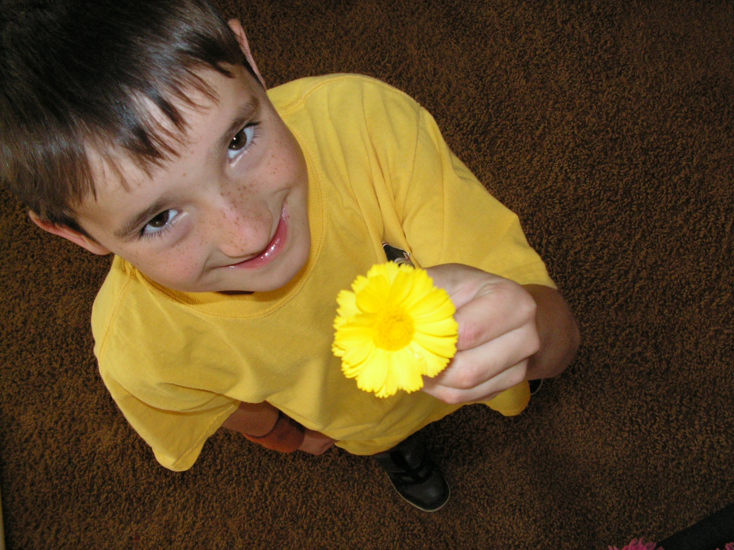 keeve's yellow flower