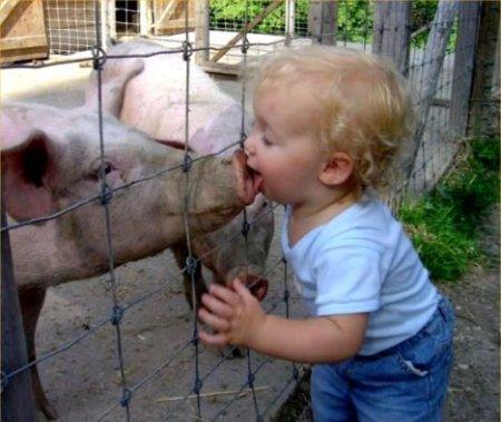 kissing-a-pig